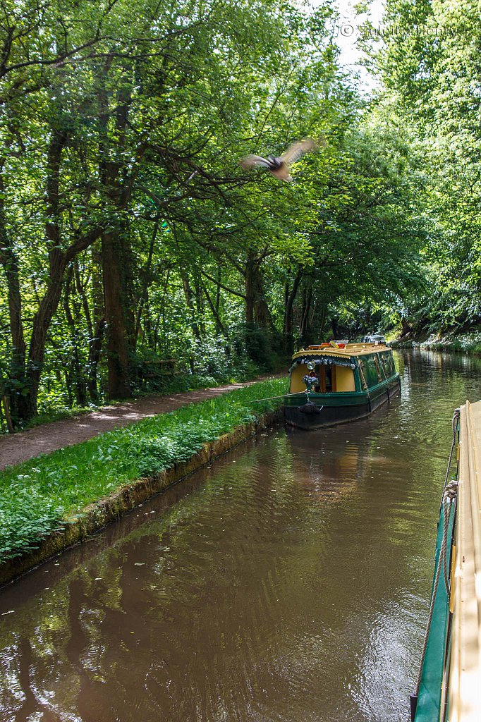 59-Zuleika-Henry-Brecon-and-Abergavenny-Canal-50-shades-of-green.jpg
