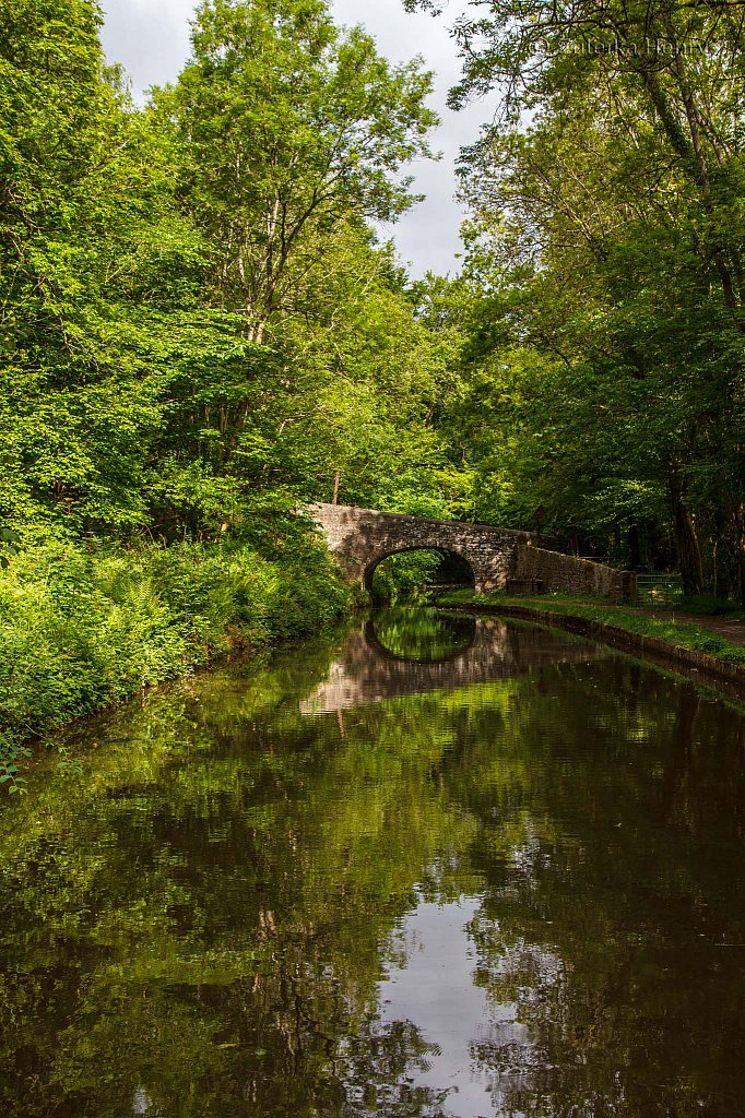 64-Zuleika-Henry-Brecon-and-Abergavenny-Canal-50-shades-of-green.jpg