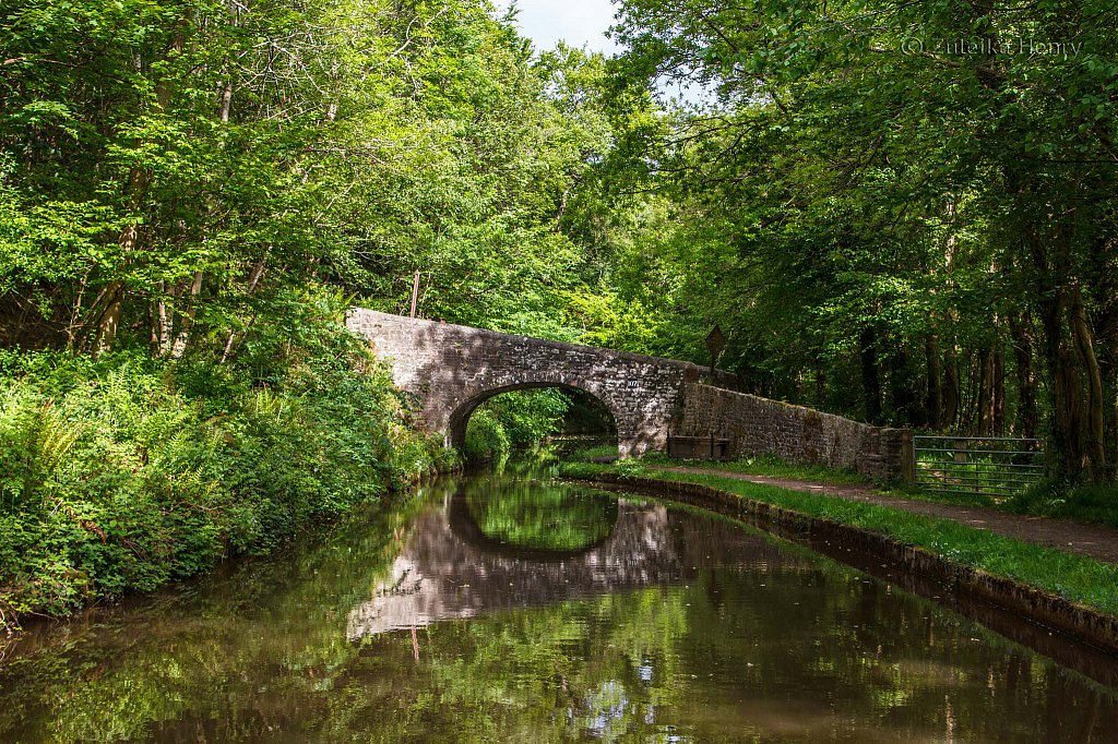 65-Zuleika-Henry-Brecon-and-Abergavenny-Canal-50-shades-of-green.jpg
