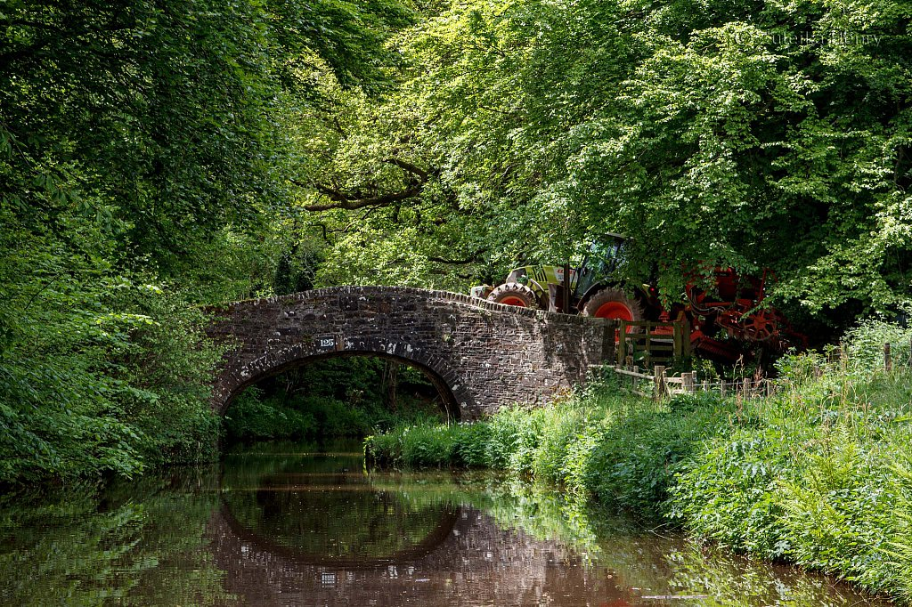 165-Zuleika-Henry-Brecon-and-Abergavenny-Canal-50-shades-of-green.jpg