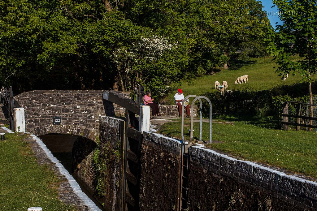 239-Zuleika-Henry-Brecon-and-Abergavenny-Canal-50-shades-of-green.jpg