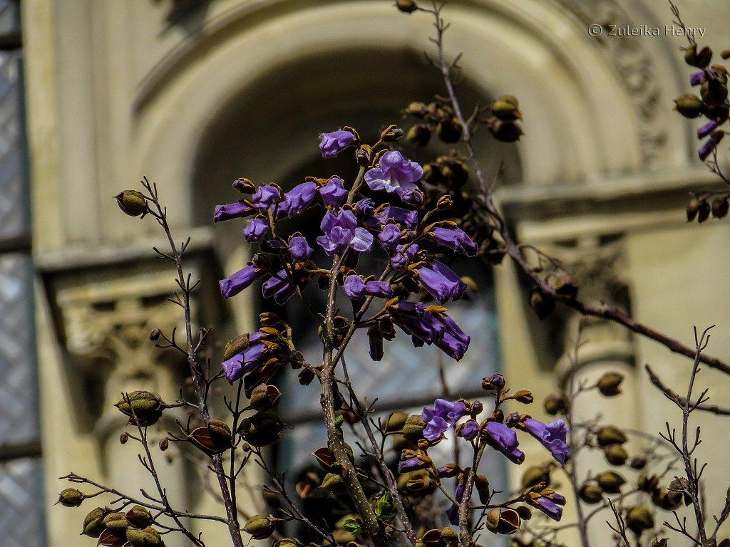 113-Zuleika-Henry-Paris-in-the-Spring-2016.jpg