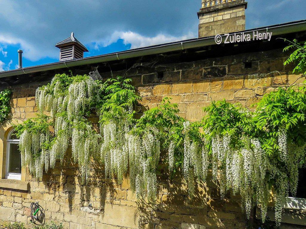 Bath-in-bloom-lockdown-2020-19.jpg