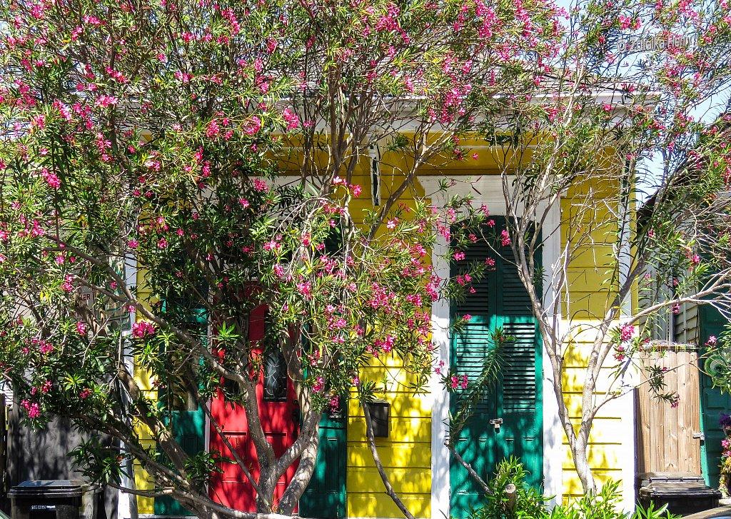 428-Zuleika-Henry-A-Taste-of-New-Orleans.jpg